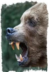 амулет медвежий клык