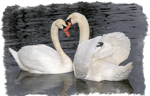 Сильный любовный заговор - как приворожить навсегда?