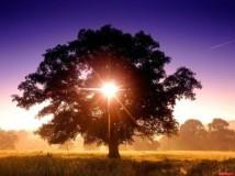 Магия и энергетика деревьев