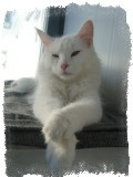 белая кошка в доме приметы