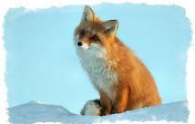 Чертог лисы