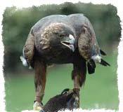 Чертог орла