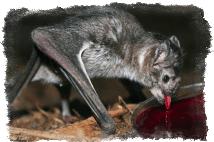 кровь летучей мыши
