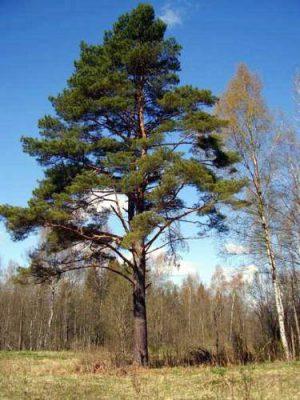 Что можно сажать под деревьями на даче