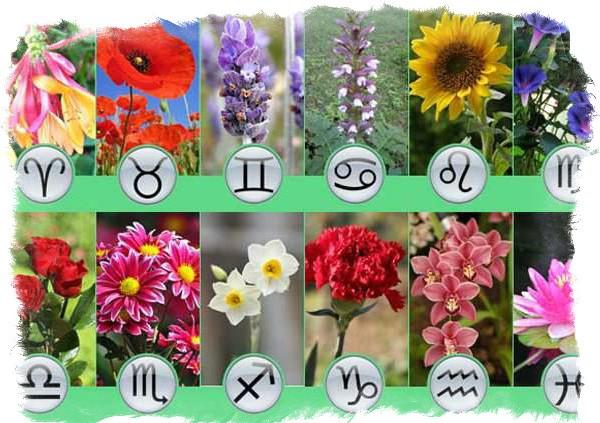под знаком весов комнатные цветы рожденных для