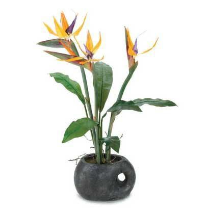 домашние цветы для знаком зодиака
