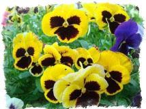 поверья о весенних цветах