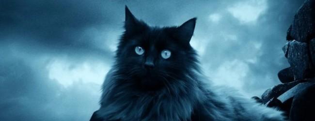 Кошка или кот приметы
