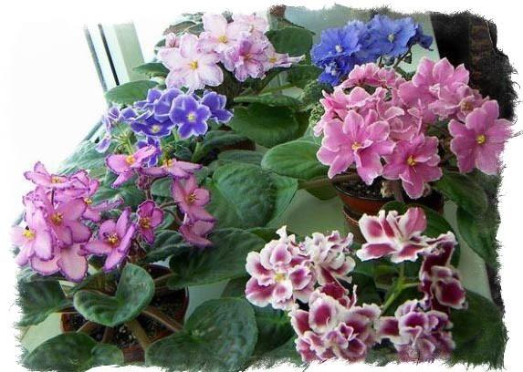 Цветы неживые в доме купить искусственные цветы на кладбище в розницу москва