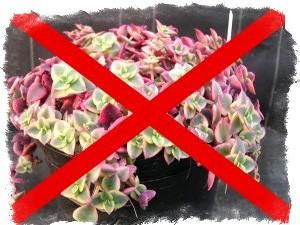 Засушенные цветы в доме приметы