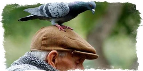 Птица насрала приметы