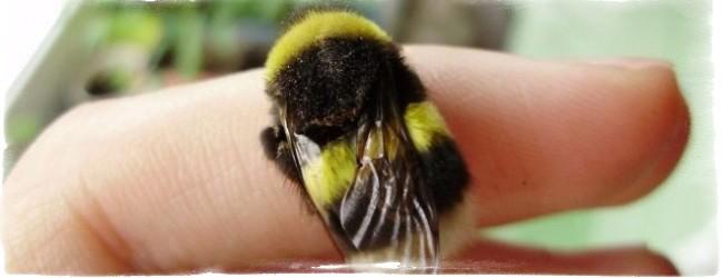 Примета залетел в окно шмель, майский жук, бабочка, оса, пчела