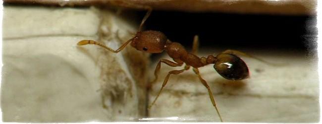 муравьи в доме примета