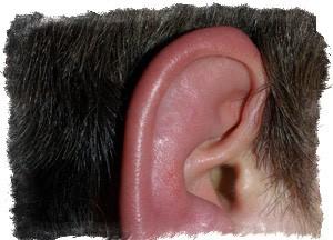 Почему чешутся и горят уши снаружи