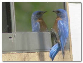 Птица на окне сидит — различные значения