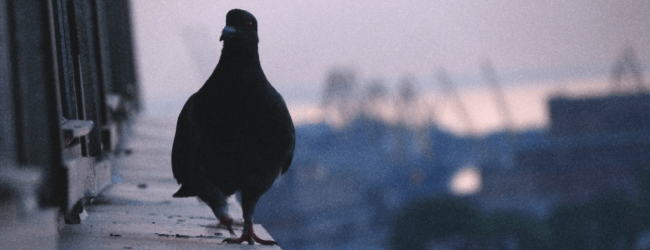 Птица села на окно (примета