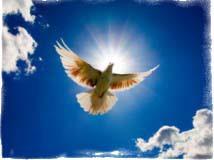 приметы и суеверия о птицах