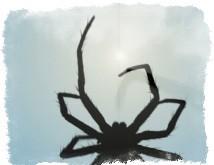 приметы паук ползет вверх