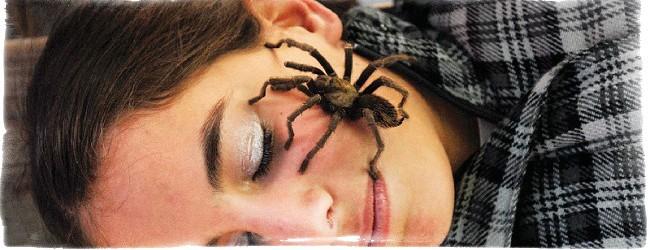 паук спустился на меня приметы