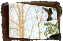птичка бьется в окно примета