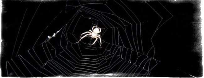 примета увидеть паука вечером