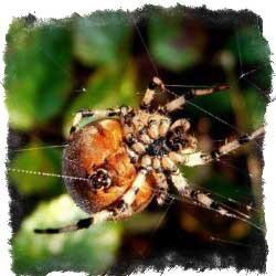 приметы увидеть паука утром