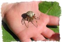 убить паука примета