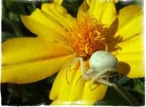 почему нельзя убивать пауков примета