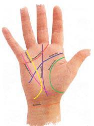 что означают линии на руке