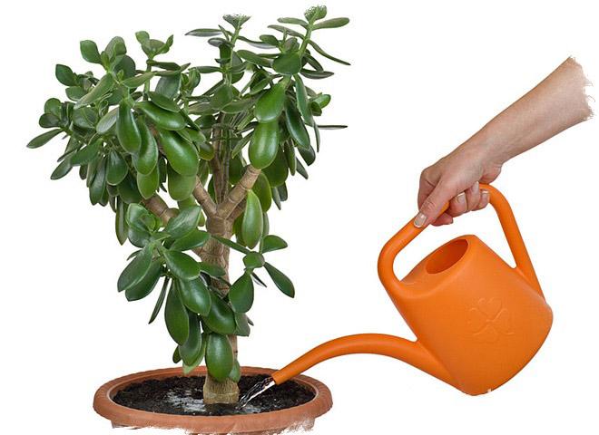 Картинки по Ðапросу Ðаговоры на растения