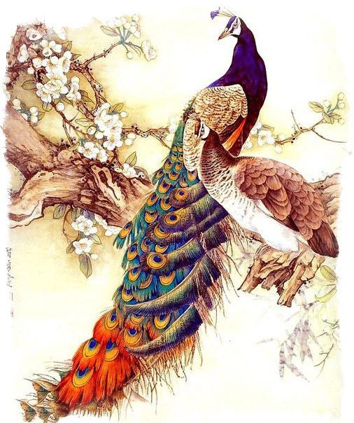 феникс птица счастья
