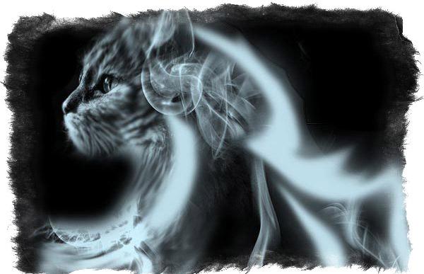 видят ли кошки души умерших