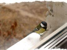 Птица стучит в окно — чего ждать?