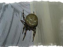 Примета — паук в доме и его влияние на жизнь