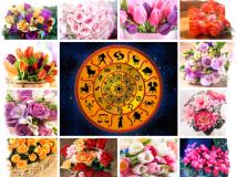 Комнатные растения по знакам Зодиака — советы и рекомендации