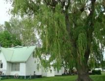 Какие деревья нельзя сажать возле дома: приметы