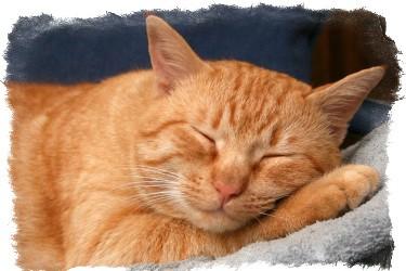 рыжий кот в доме приметы