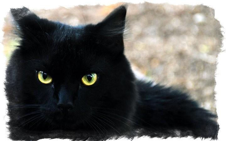 Кот в доме — приметы о расцветках любимцев