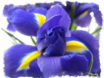 растения весеннего цветника легенды и поверья