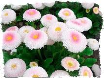 поверья легенды о весенних цветках