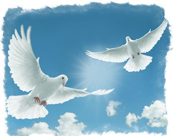 приметы и суеверия про птиц голубь