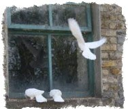 приметы голубь