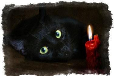 Про серых, усатых, полосатых!!!: Группа Ни дня без кошки!