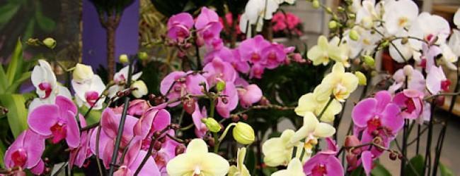 орхидея в доме приметы