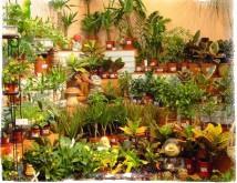 Суеверия и приметы о комнатных цветах