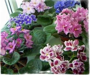 цветы в доме приметы