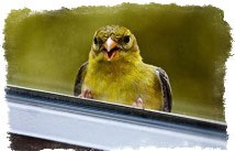 примета птичка накакала на окно