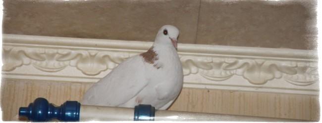 Птица залетела в дом примета