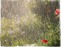 Приметы о дожде