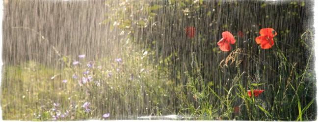 Приметы попасть вместе с любимым под дождь